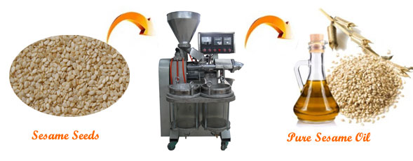 make sesame oil easily with our professional sesame oil press