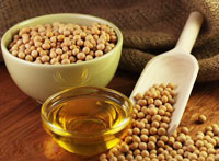 soybean seeds and oil